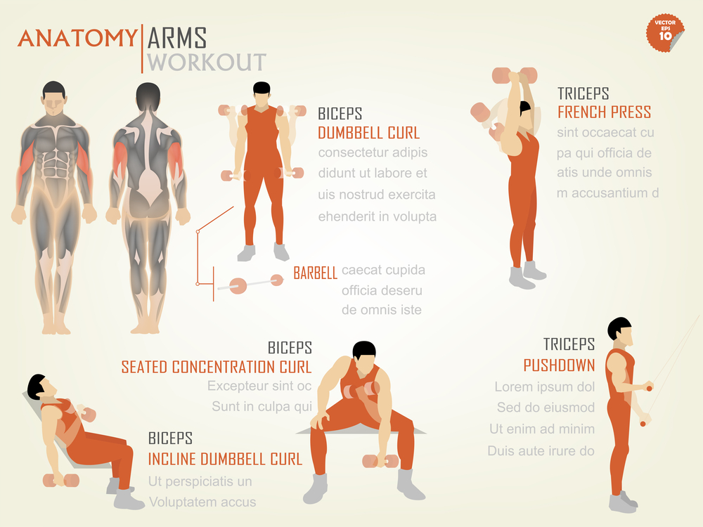 Bicep Workout Plan